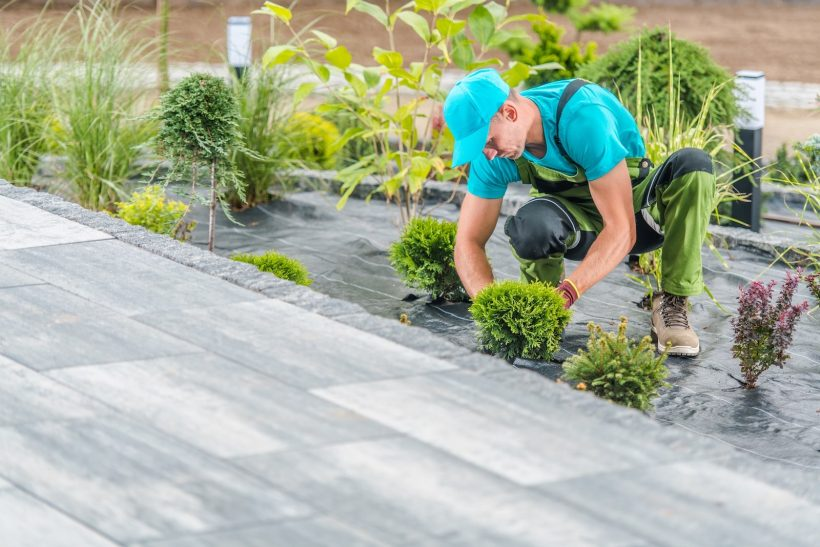 Planting plants: Sustainable growth