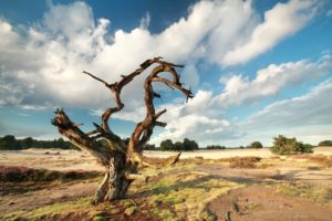 dry dead tree over blue sky