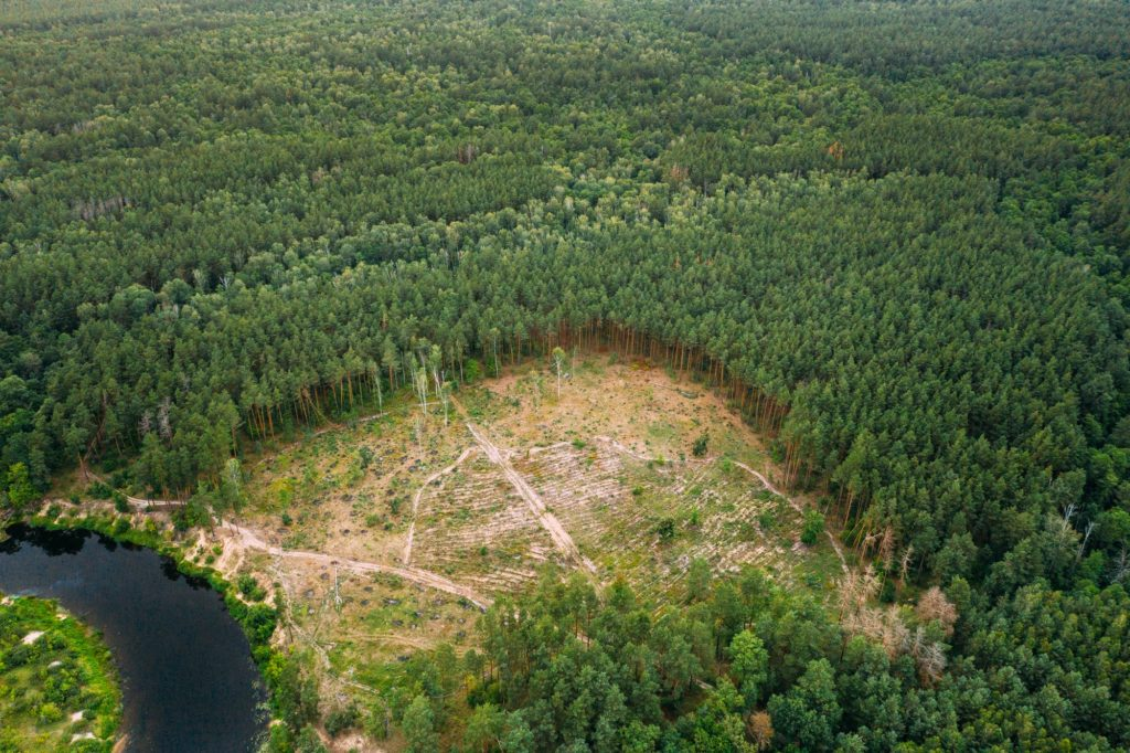 Aerial View Green Forest Deforestation Area Landscape. Top View